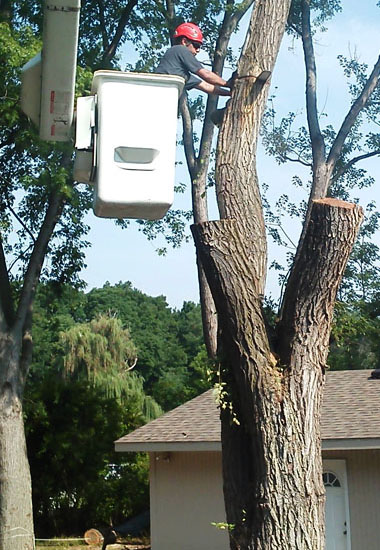 Tree Care overview new